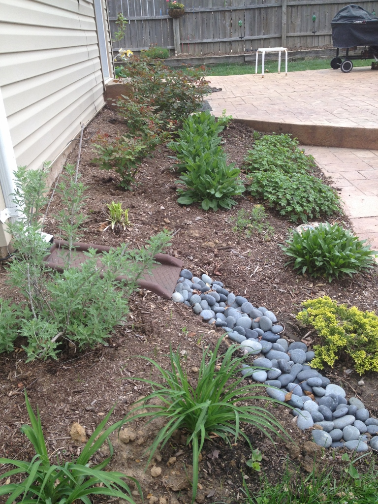 Mother Nature is not the only one who has been busy. I have added the rocks to better direct the drainage from the downspout, cleaned out the bed and trimmed the roses. I have added a few plants as well, although the vast majority are perennials planted over the past three years.