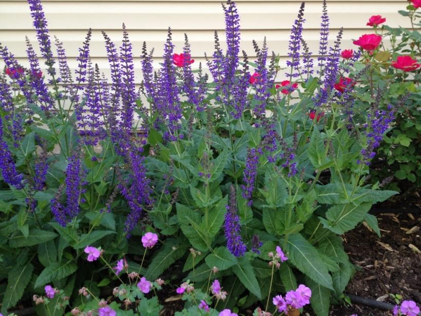 3 plants in den garden (1280x960)