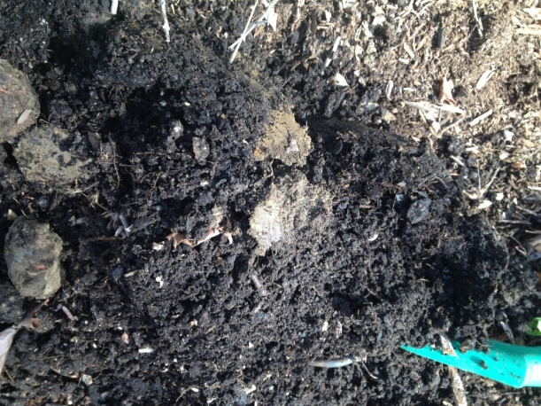 Can you spot the clay soil in this sample? Hint: It's the stuff that looks like meatballs.