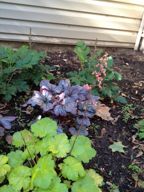 I have concentrated on planting in the sunny spots in the yard but have found a few shady areas to fil lin.