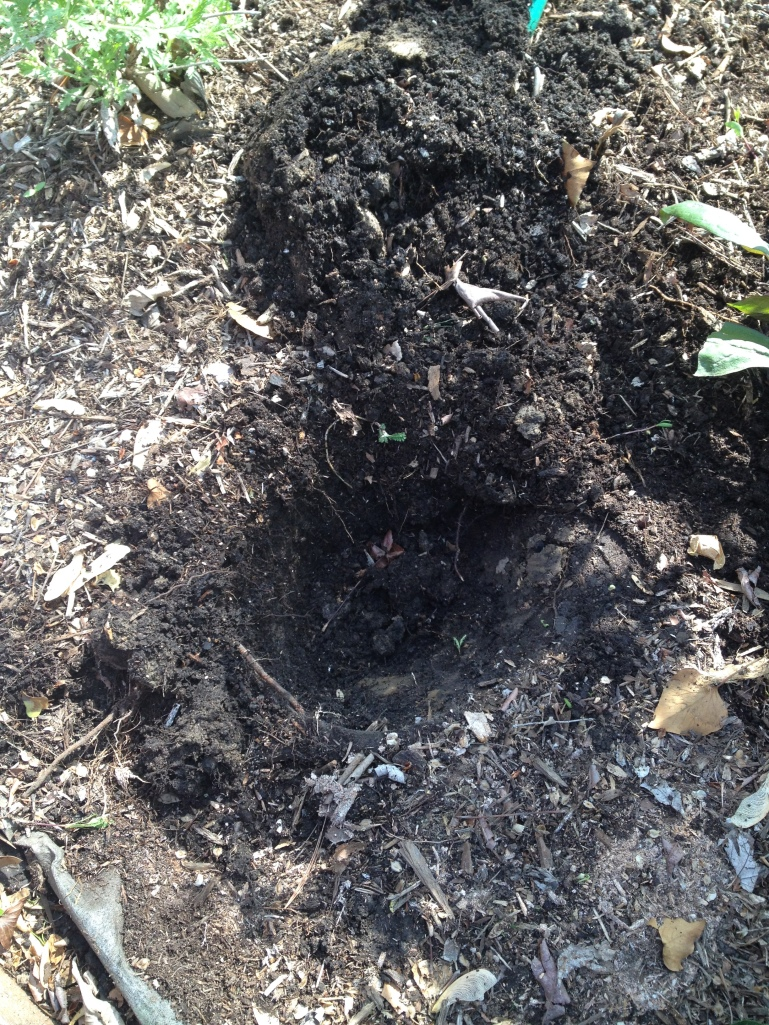 After three years of adding lots of compost to my clay soil, the structure is finally improving