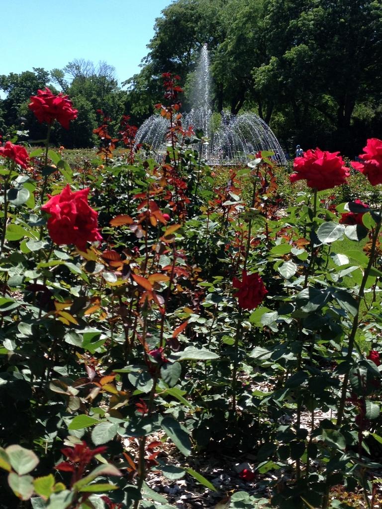 Columbus Rose Park The Arch City Gardener