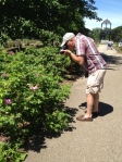 The Rose Park speaks to strollers, photographers, painters and garden lovers.
