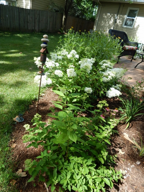 Happy summer hydrangea. Little Lamb and Little Lime wind throughout the bed.