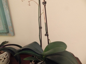 Orchid #2 stems