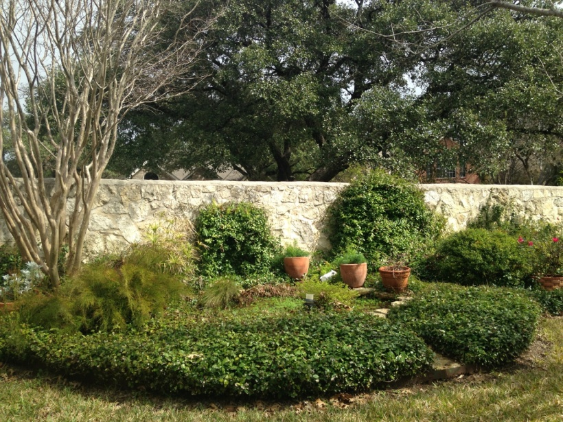 A crape myrtle is to the left of the pond, which is densely planted with sun loving natives.