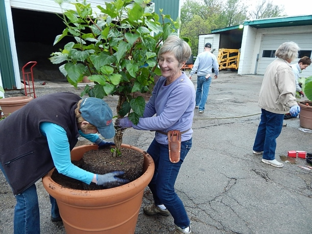 Volunteers make light work of heavy lifting. More than 30 containers were filled and placed around the city as part of the beautification effort.