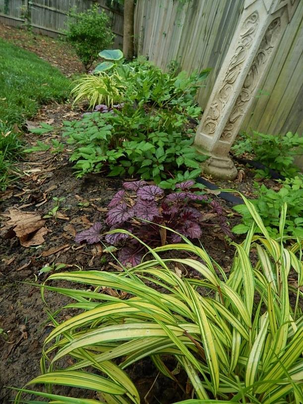 2015 shade garden purple