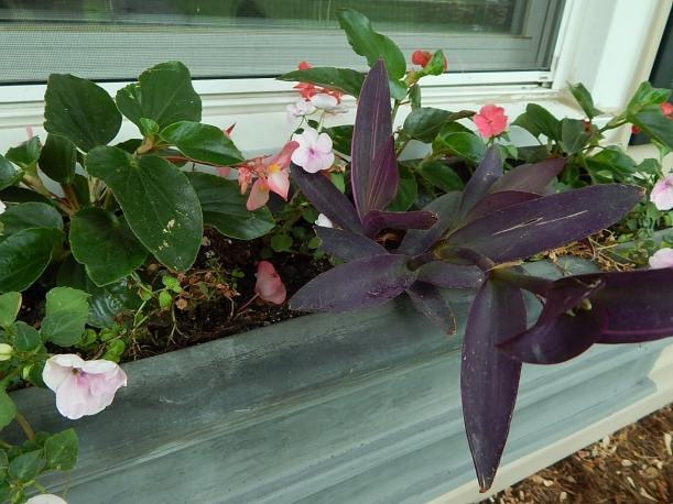 2015 Window box purple