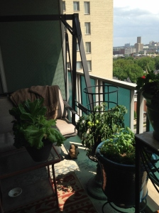 Patio tomatoes thrive 15 stories up. Small space gardening is becoming more common.