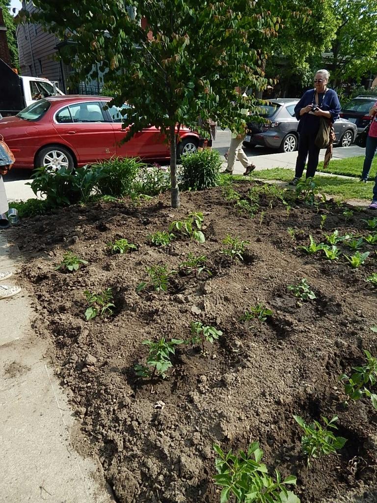 A neighborhood city lot turned into a flower garden.