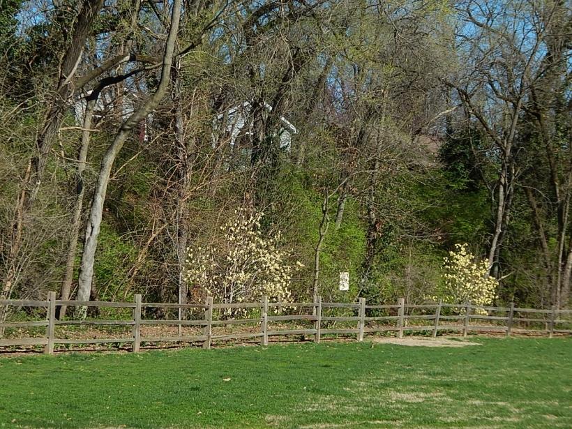 Larson park (1280x960)