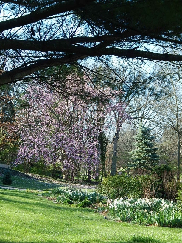 Street view spring (960x1280)