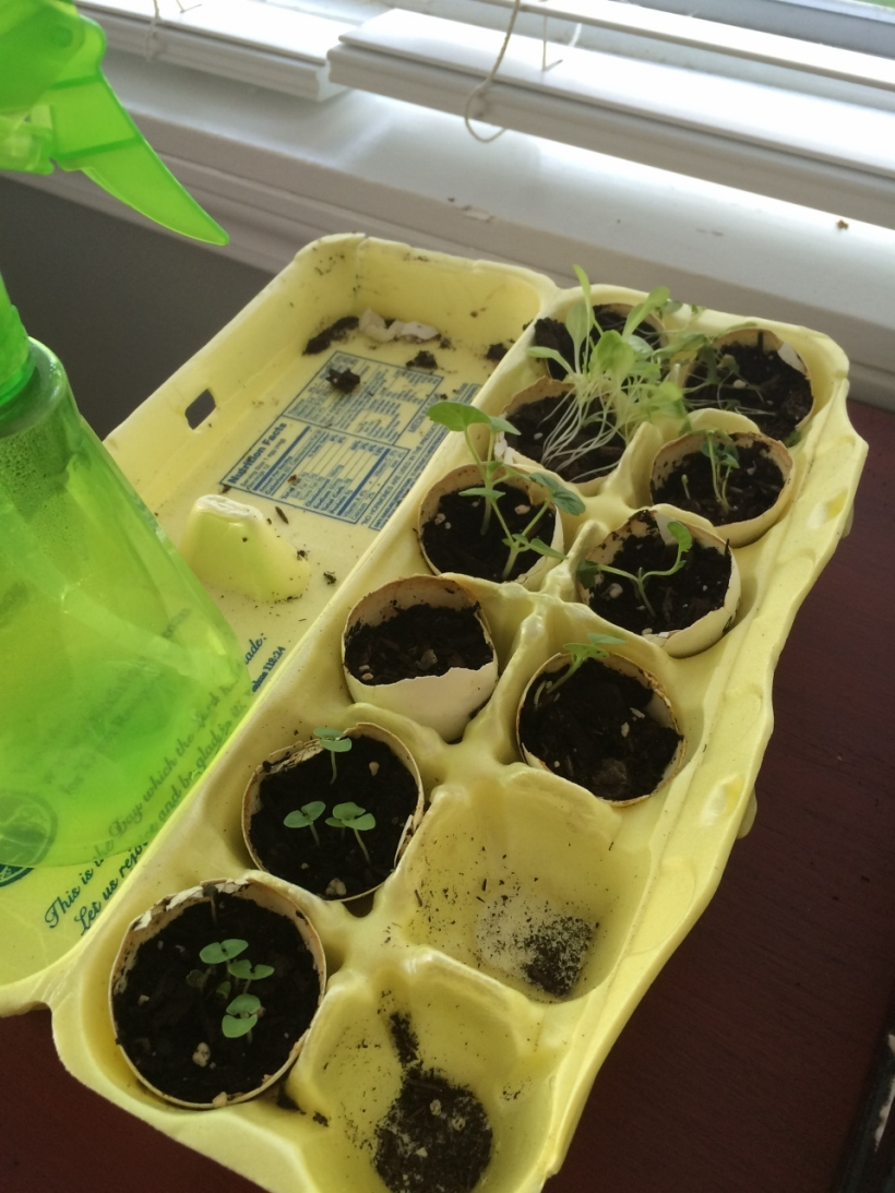 egg carton growing (960x1280)
