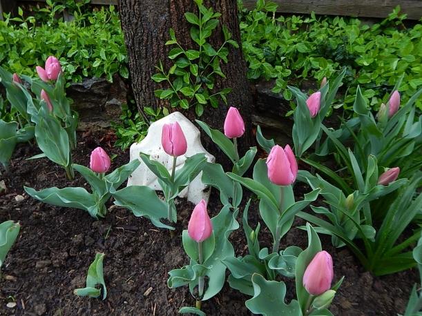 Tulips April (1280x960)