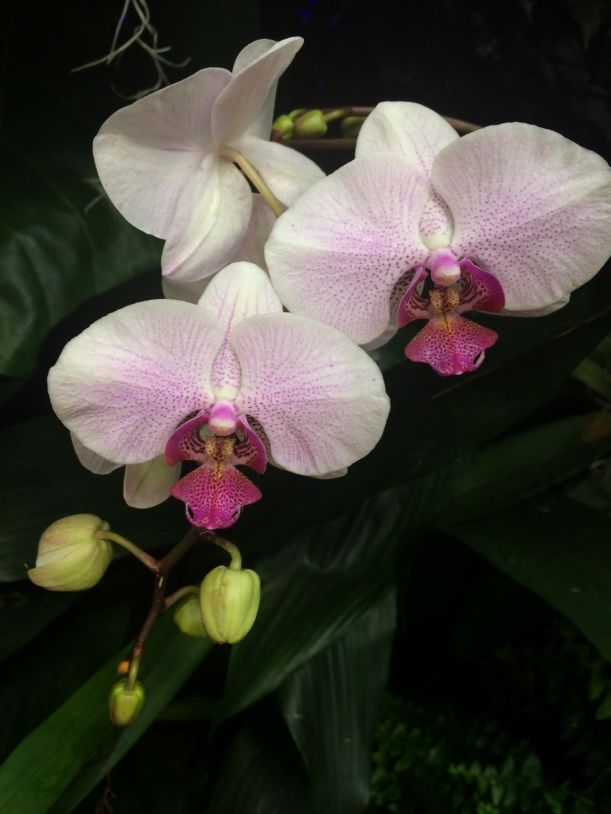 Orchid 10 2018